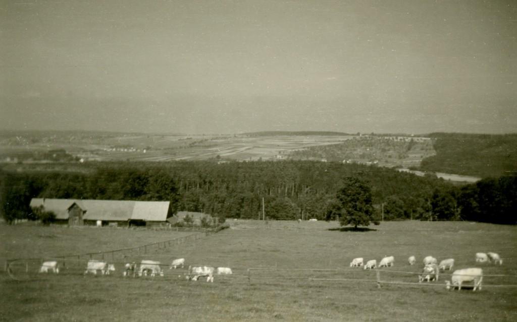 ca. 1940 Jungviehweide mit Wirtschaftsgebäude. Blickrichtung Norden.