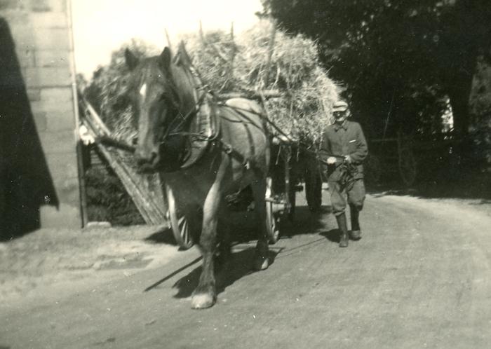 ca. 1955. Gustav Bodammer beim Heu einfahren